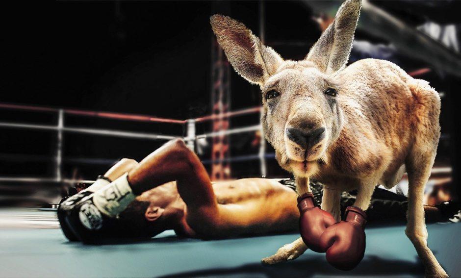 ボクシングカンガルー