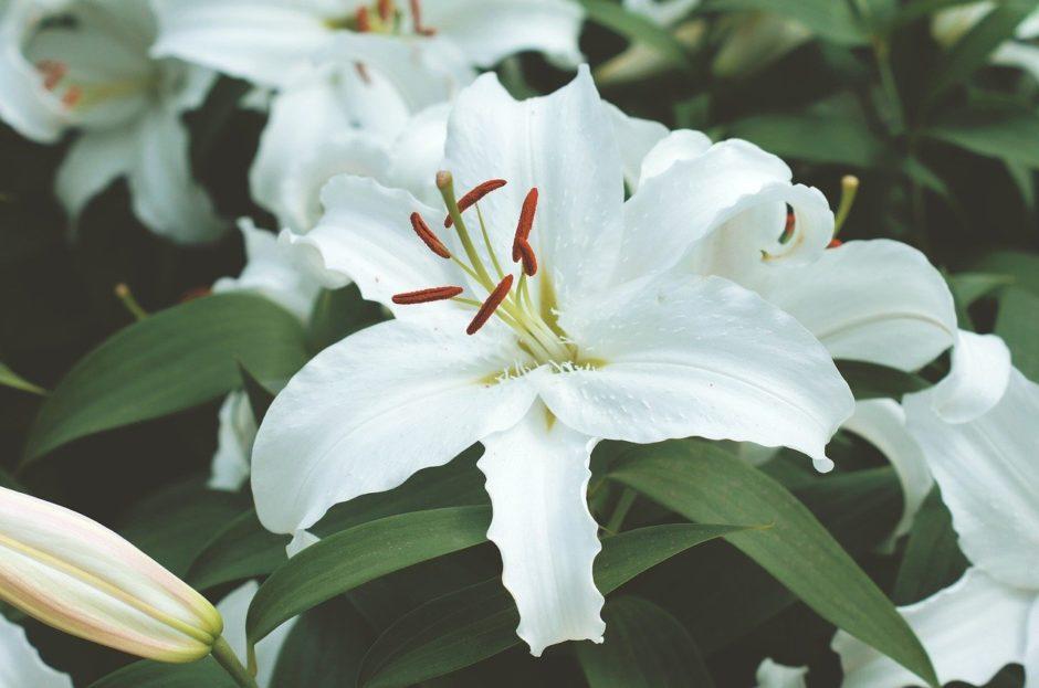 plant-4245818_1280